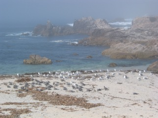 Birds on the beach at Pacific Grove