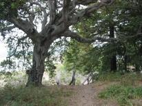 Elk Horn Slough Hiking Trail