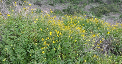 Wildflowers Along Nature Trail