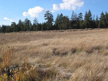 Meadow Along the Lake Shore of Big Bear Lake