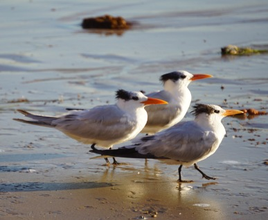 Crystal Cove Sea Birds
