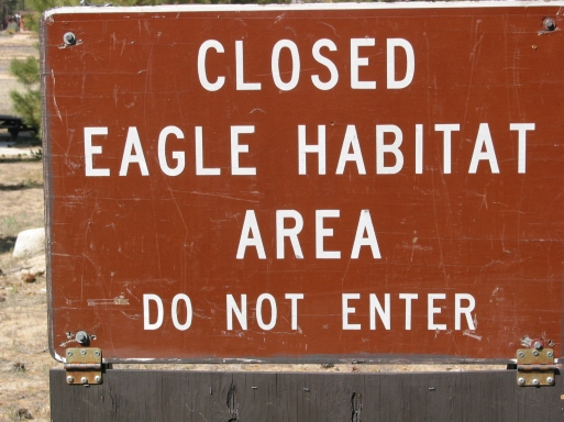 Big Bear Eagle Habitat