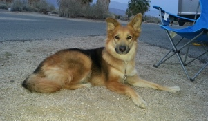 Lena Relaxing At Anza Borrego