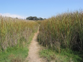 Buena Vista Lagoon Ecological Reserve