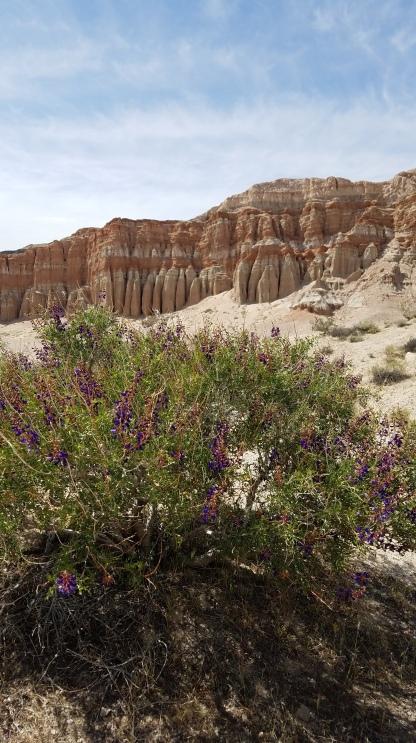 Red Cliffs loop trail