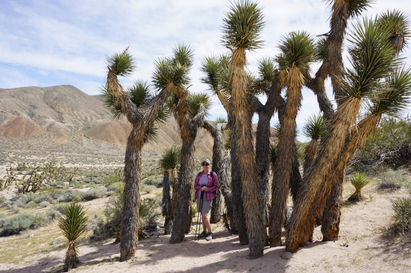 Alex and Joshua Trees on Red Cliffs loop trail