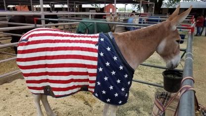 Patriotic Mule