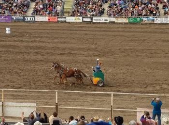 Mule Chariot Racing